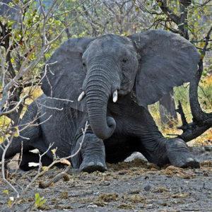 бумага из какашек слона