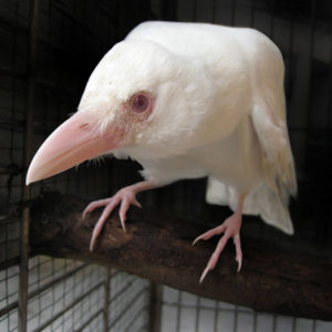белая ворона в коллективе