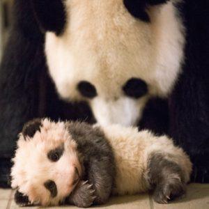 младенец и мать этапы