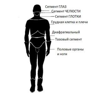 Сегменты тела