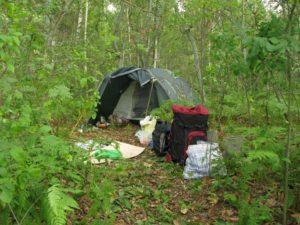 терапевтические походы в лес