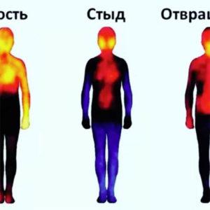 как стыд отражается в теле, теплограмма эмоции стыда