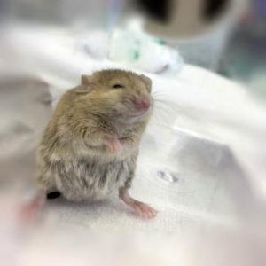 чувство удовлетворения у мышей