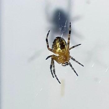 страх пауков арахнофобия