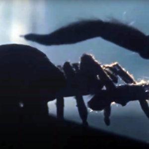 арахнофобия страх пауков