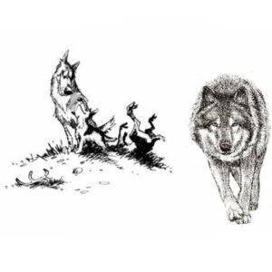 агрессия хищника